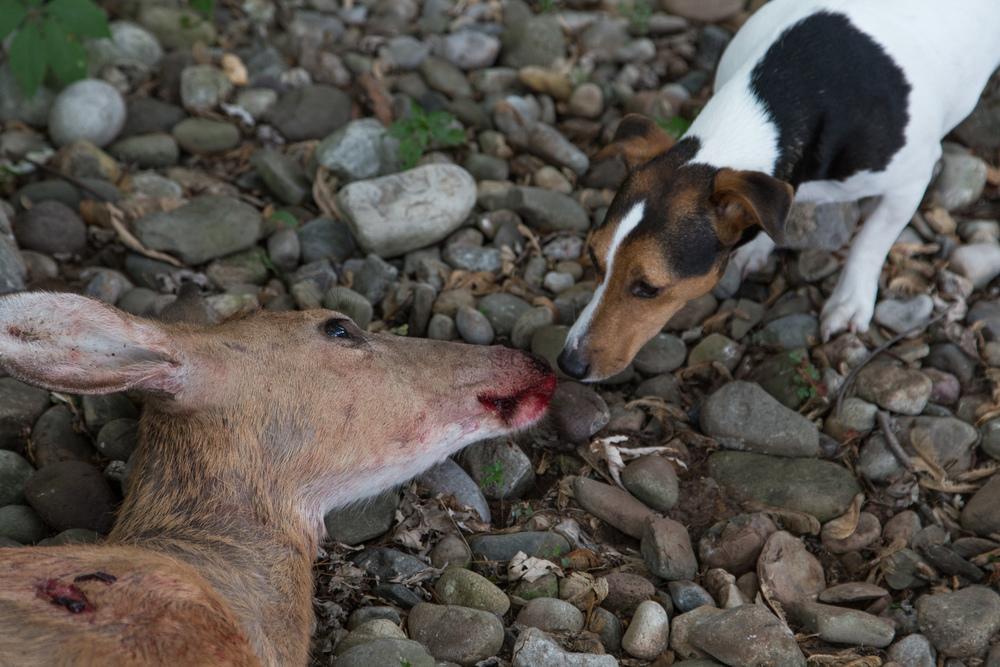 Dexter and Doe, 2014