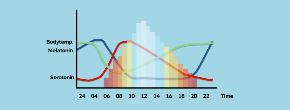 the differences in peoples circadian rhythms at different times of the day Circadian rhythms of people are more determined by time since waking will show different time-of-day effects and what the mechanisms are that underlie these.