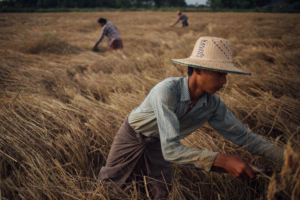 2017_UNCDF_Myanmar_17.jpg