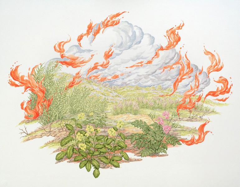 Wildfire Vignette