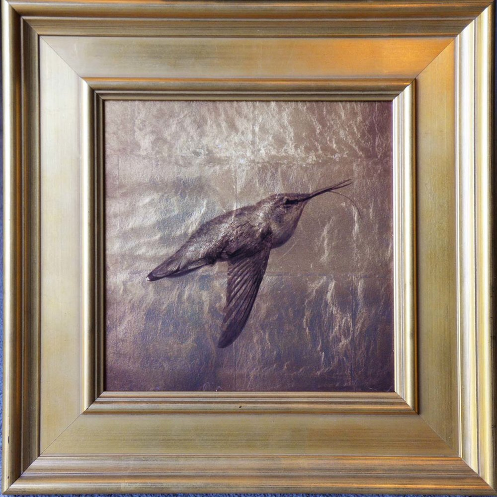 108. Hummingbird Flying .jpg