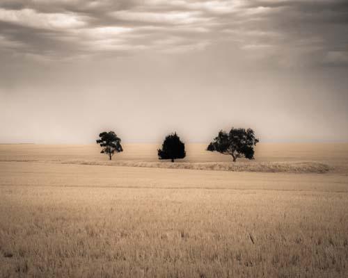 Three Trees near Clare, South Australia
