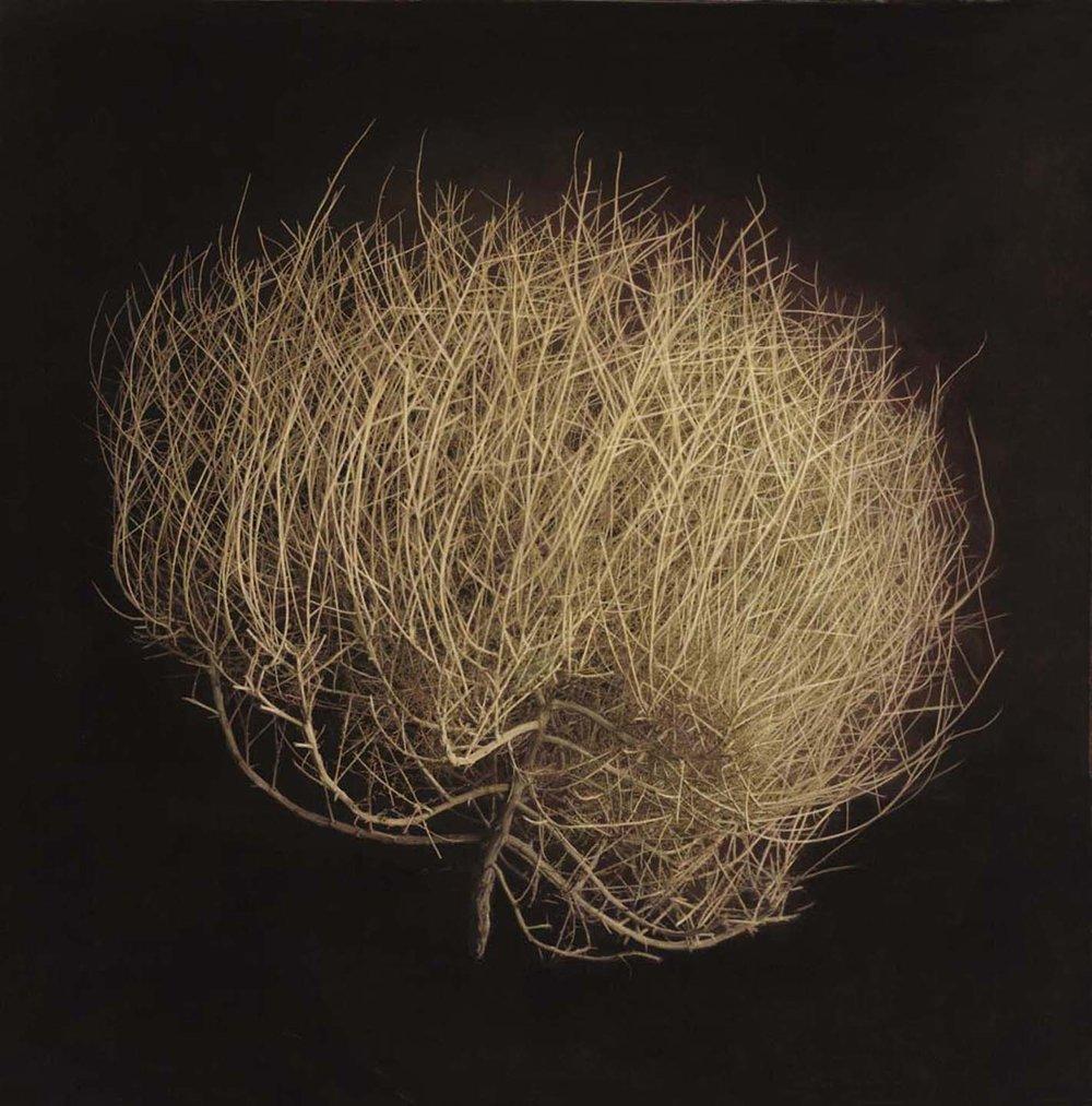 Tumbleweed, Silverbell