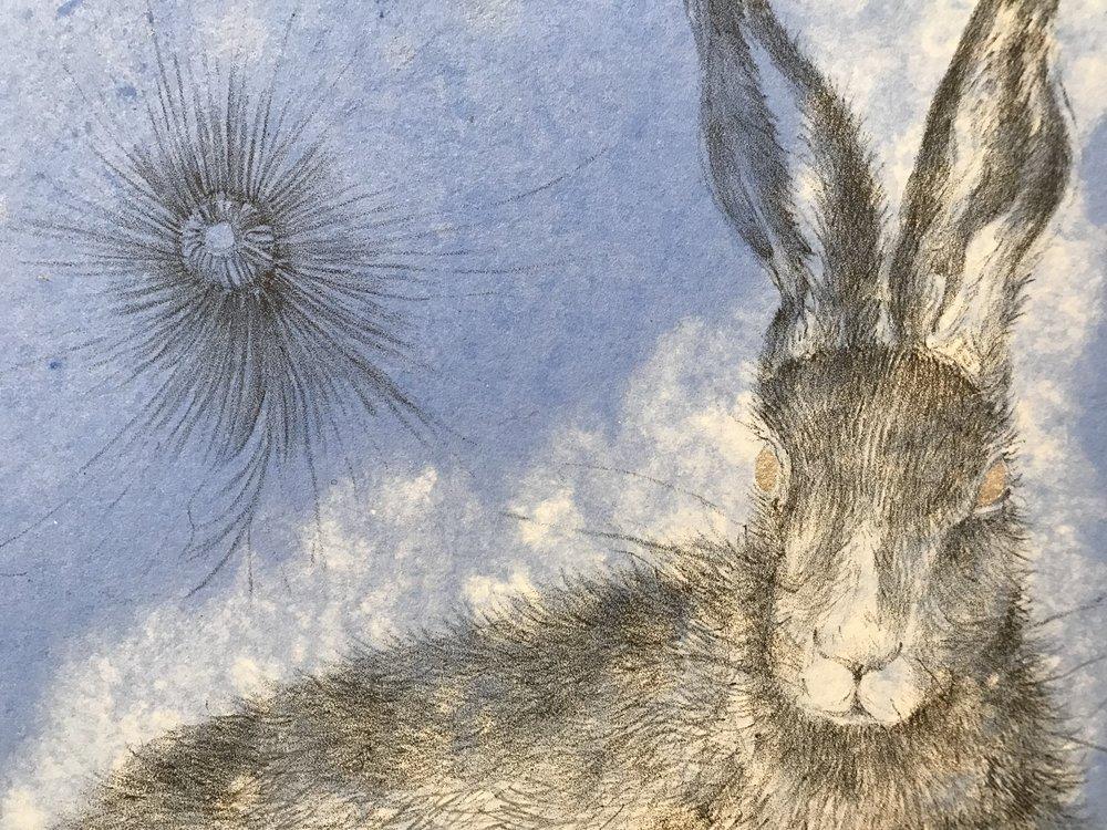 Hare (dark), AP, litho on handmadepaper, w pigment, silver pochoir, 13 58 x12, DETAIL4.jpg