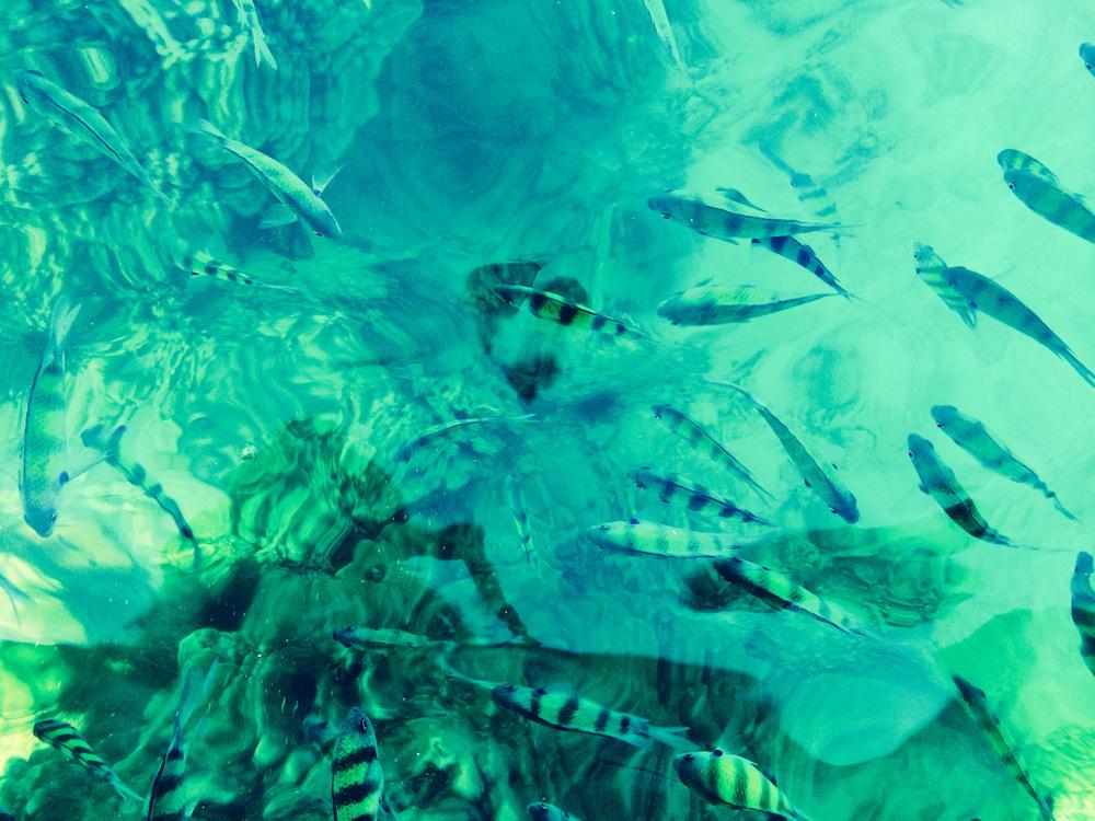 Krabi-Tonsai-Railay-Thailand-AmyRolloPhoto-3595.jpg