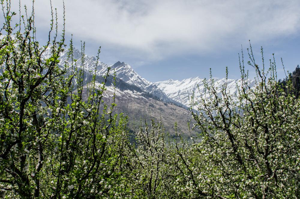 Manali-HimachalPradesh-Bouldering-RockClimbing-AmyRolloPhoto-3094.jpg