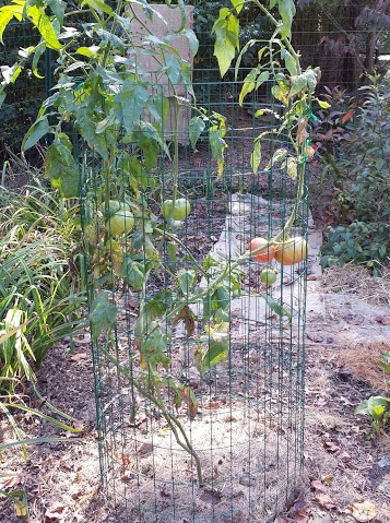 CREATE VARIABLE-DIAMETER TOMATO CAGES!