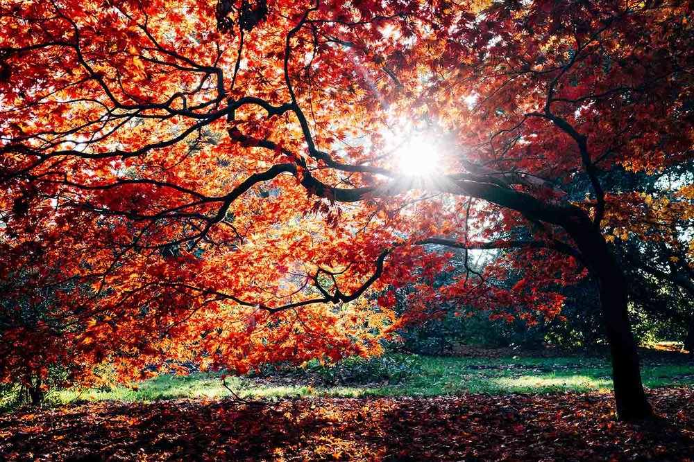autumn-1500px.jpg