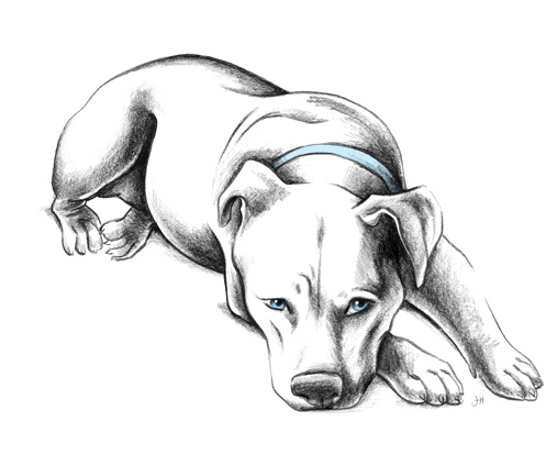 pitbull_layingDown