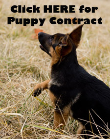 Click here for puppy contract.jpg