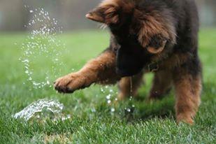 water cute.jpg