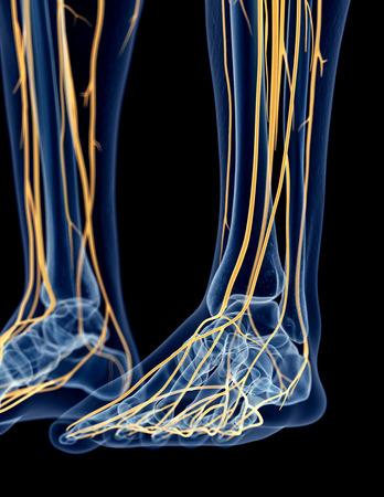 42587841_S_nerves_feet.jpg