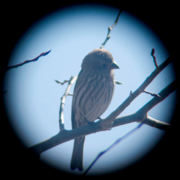 2_finch-birds.jpg