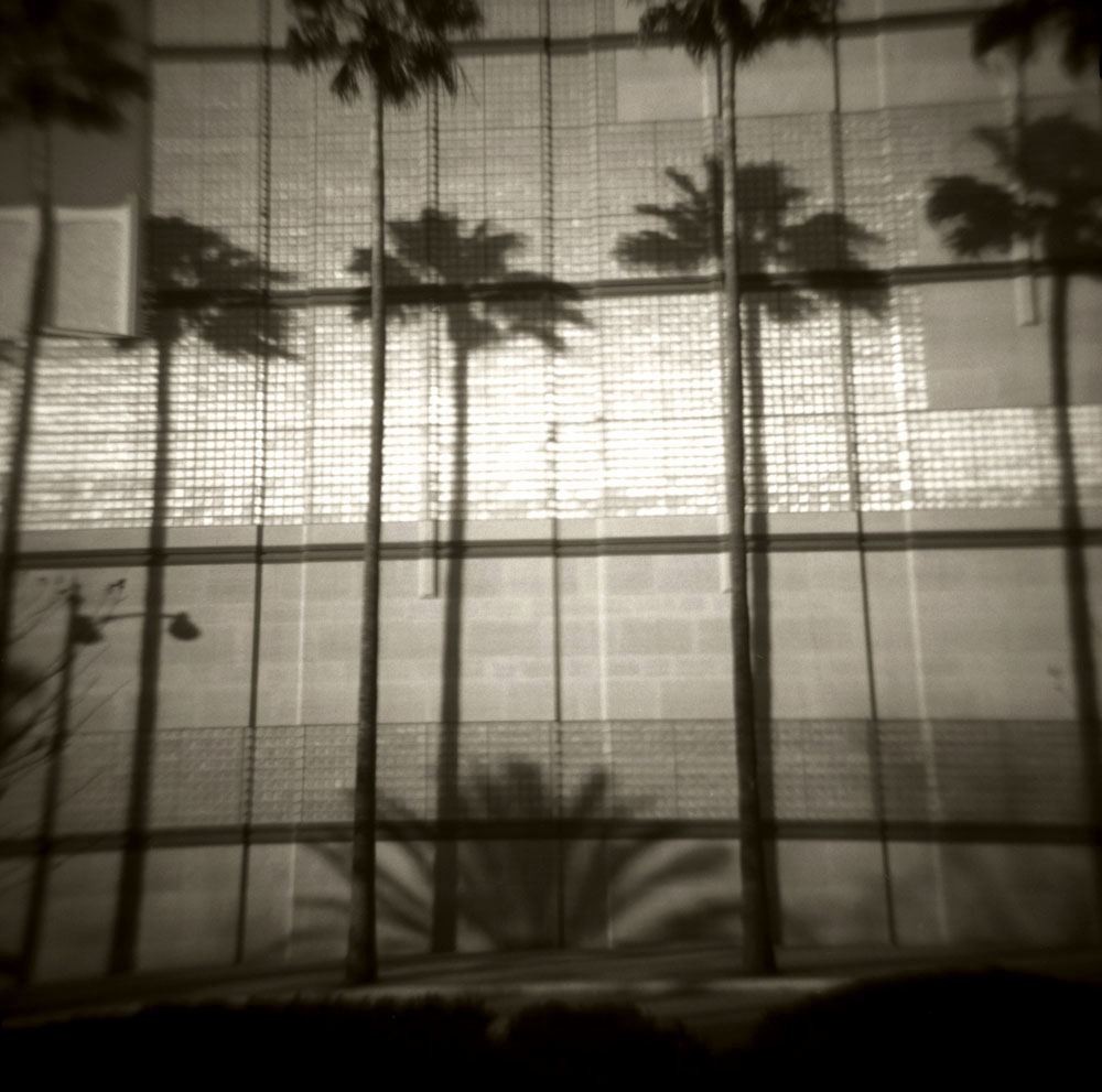 l.a. palms 2