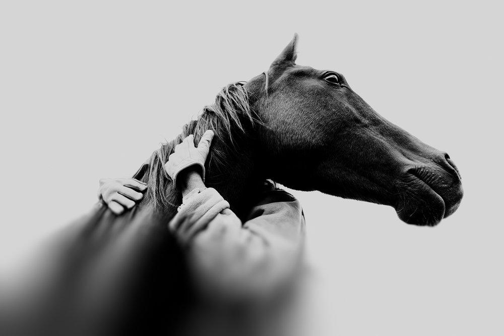 vista caballo