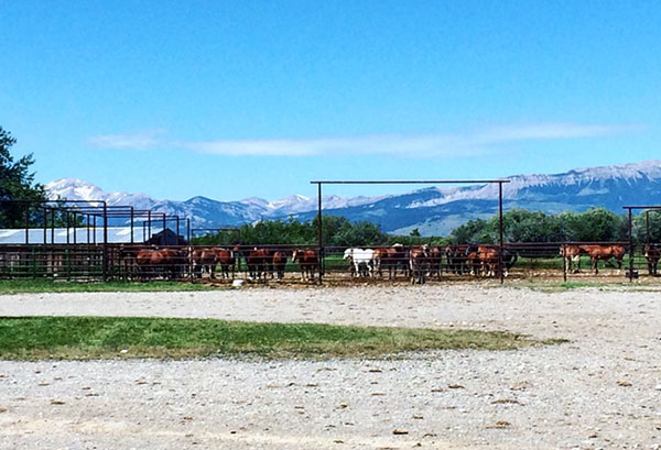 View from the Crary Ranch