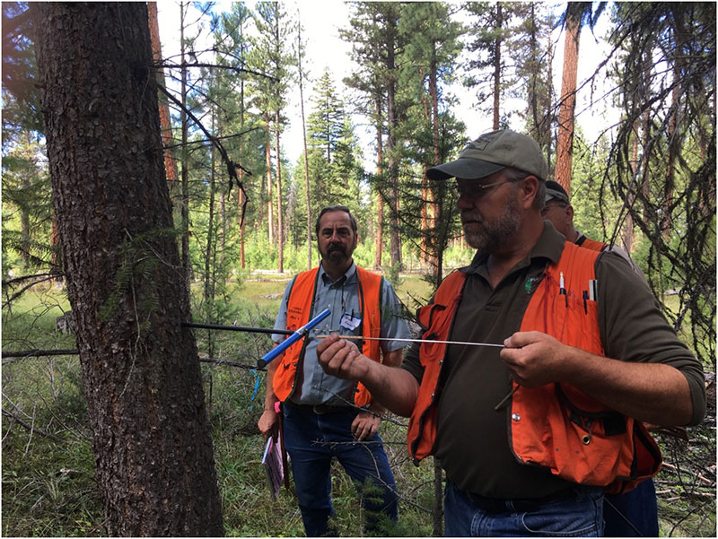 DNRC Service Forester Allen Branine showing participants how to use an increment borer to age trees.