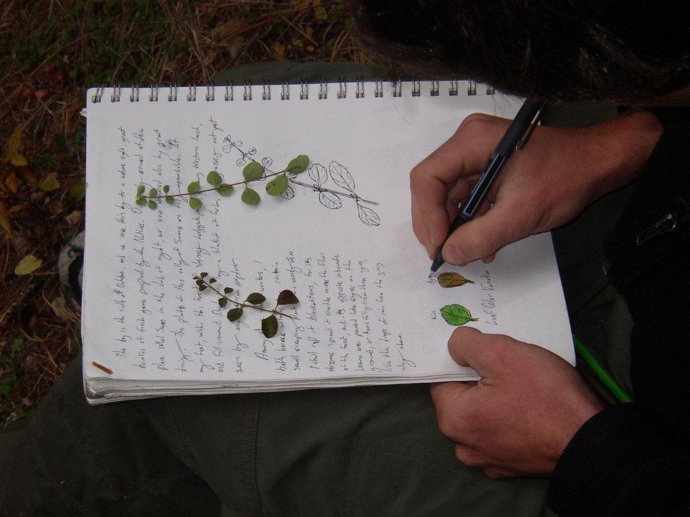journalhands.jpg