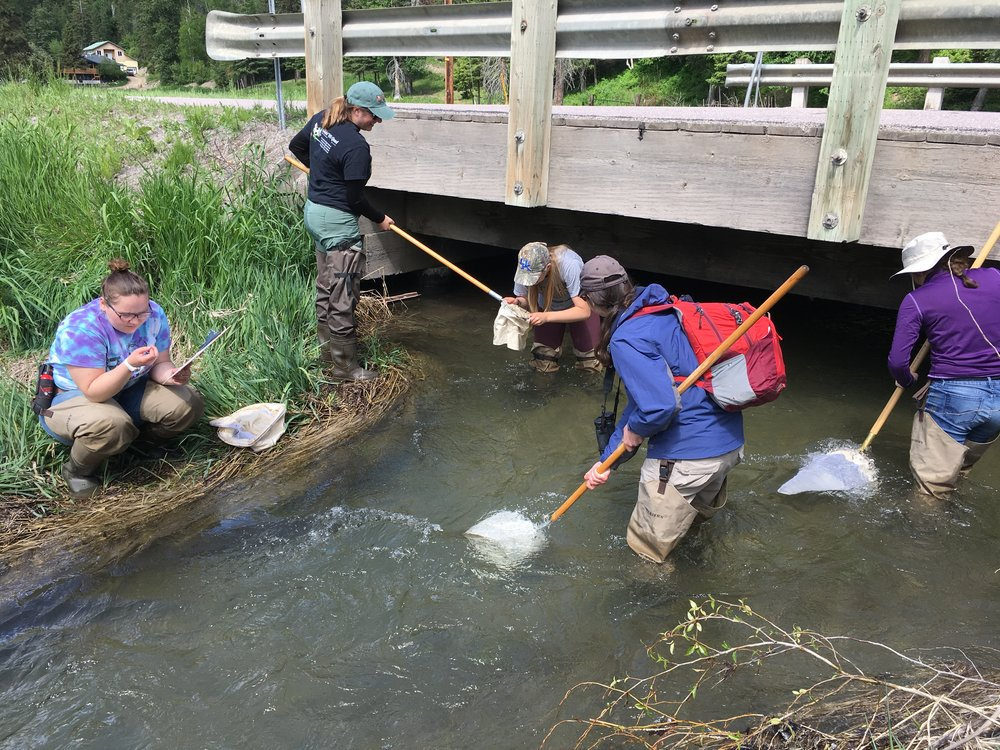Macroinvertebrate Sampling at Bond Creek_WiW_30May2018.JPG