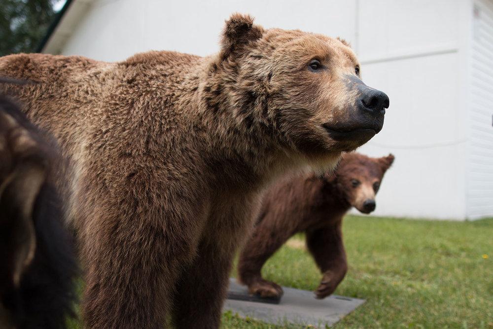 bear-fair-2.jpg