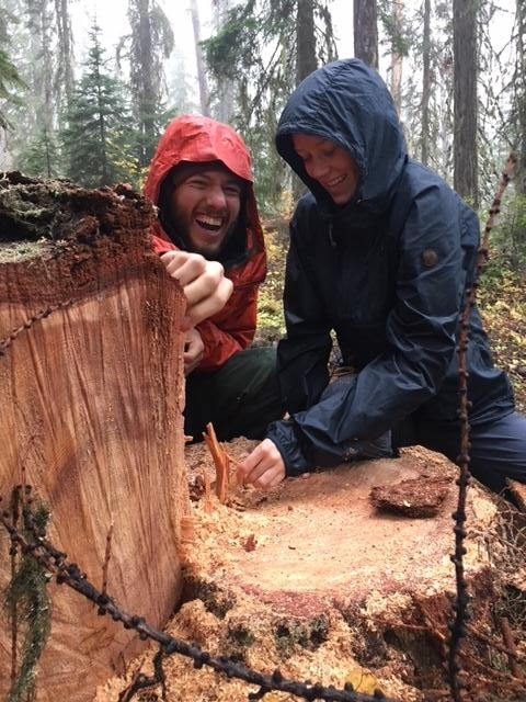 Checking the age, represented by the number of growth rings, on a larch tree.  Photo by Sarah Fisher.