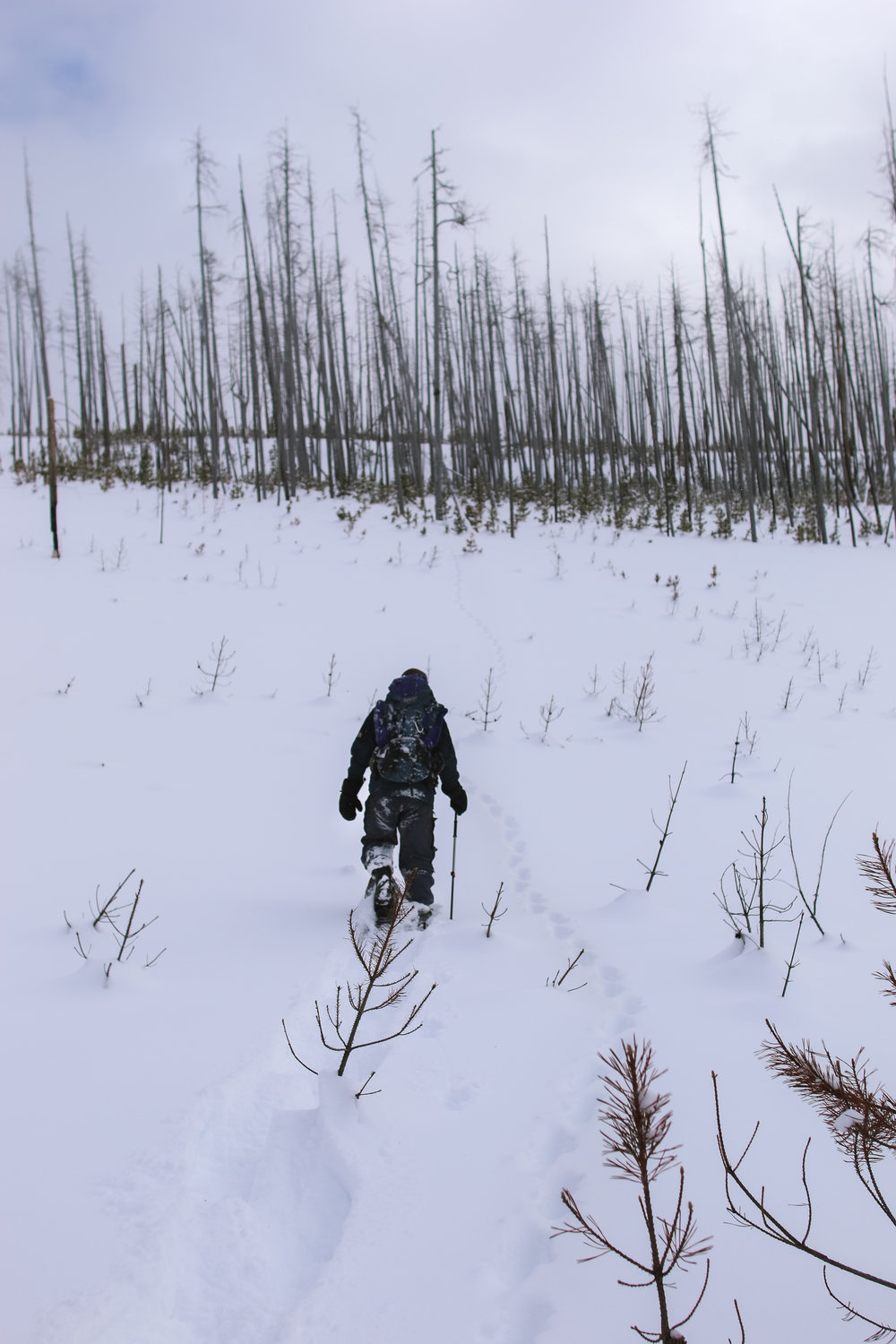 Mike Mayernik tracking a lynx in the Liberty Fire area.