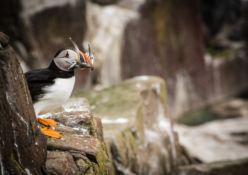 Farne Islands -