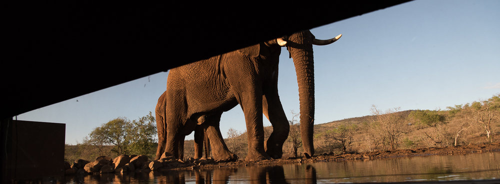 Umgodi Overnight Hide: Elephants come into view in the early morning light