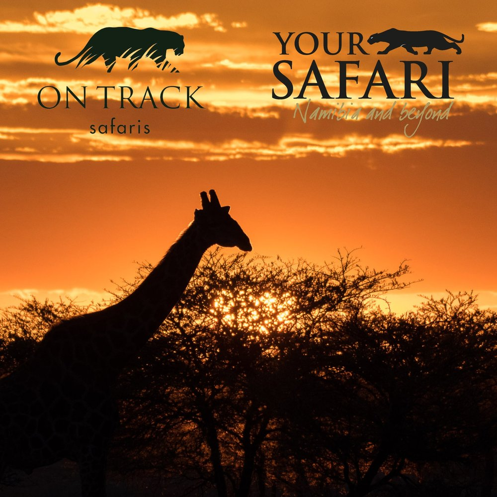 Wildlife Photography Tours - Namibia, South Africa and Other Destinations