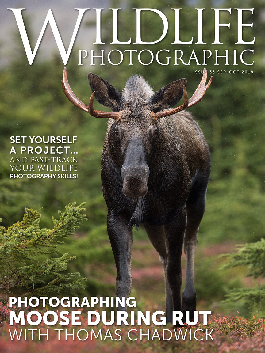 WP Issue 33 Cover.jpg