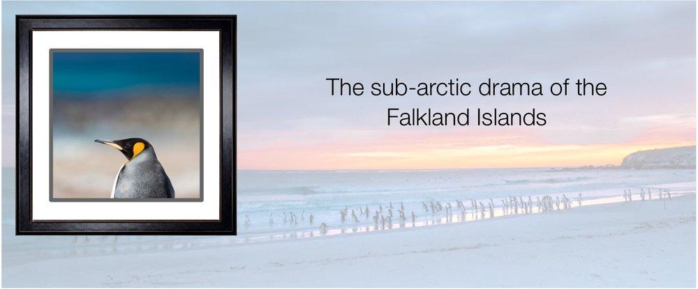 Collection_Falklands.jpg