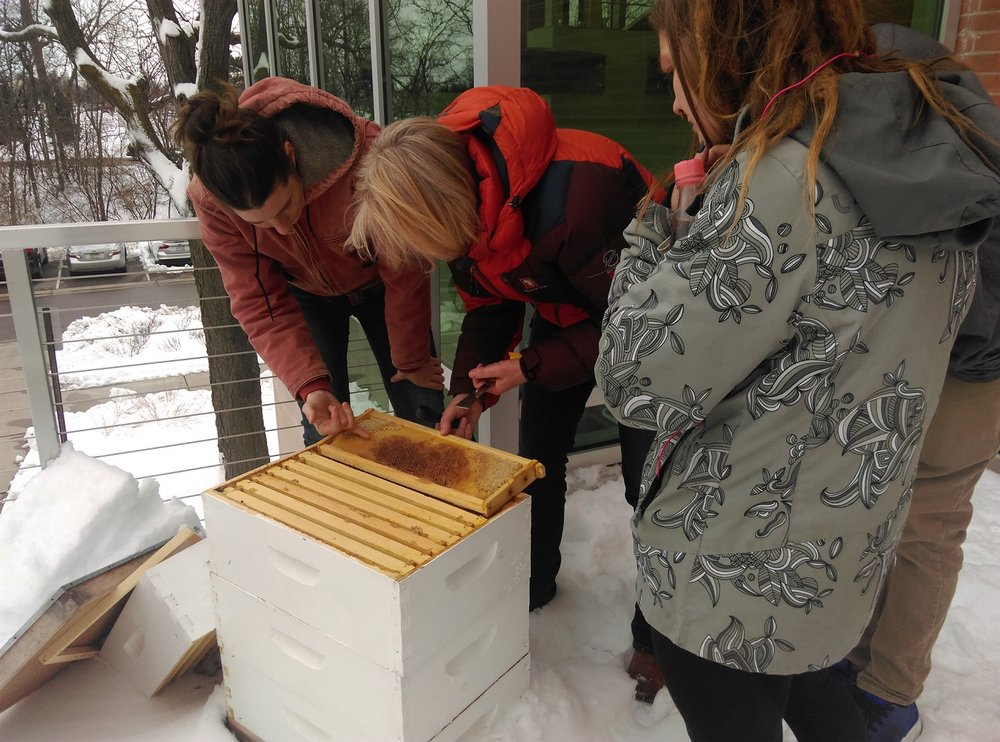 Working with hobby beekeepers to determine the cause behind their lost colony.