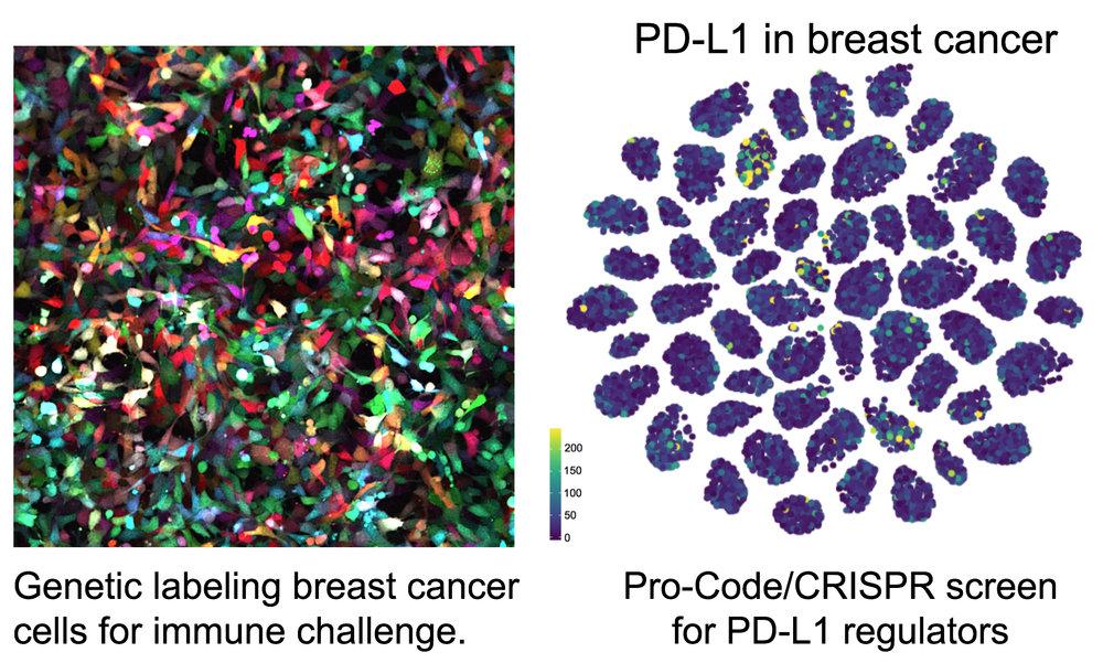 4T1-Pro-Code-PDL1.jpg