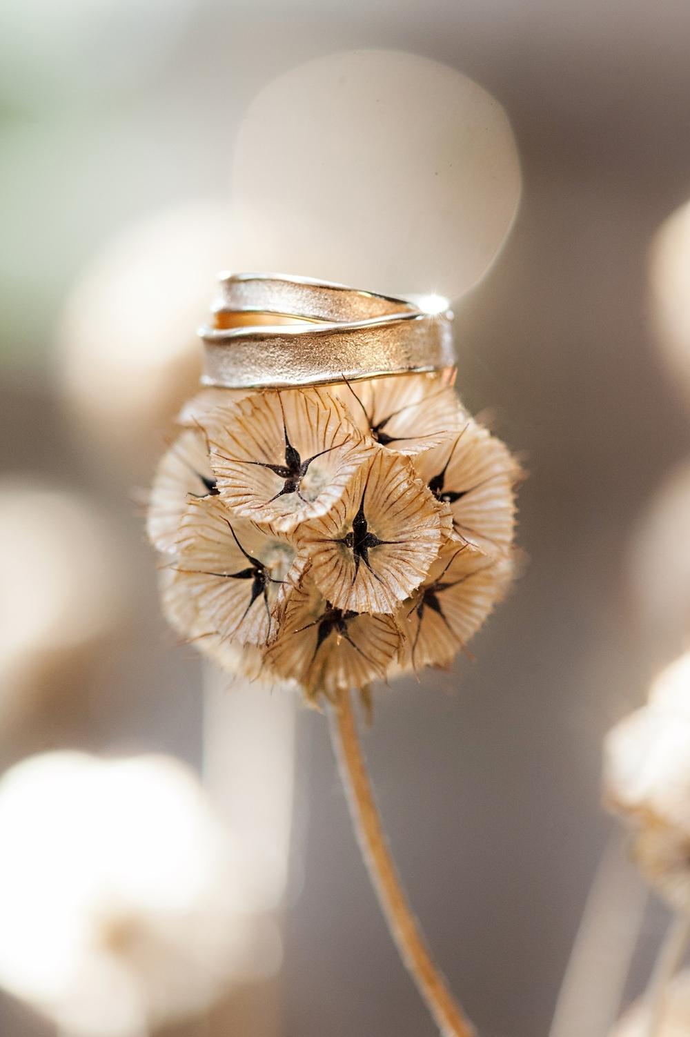 Tangled-Gardens-Wedding-Halifax-Elopement103.jpg
