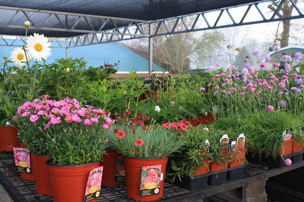 Spring is right around the corner — Harvey\'s Farm and Garden Store