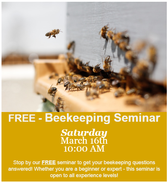 website - bee.PNG