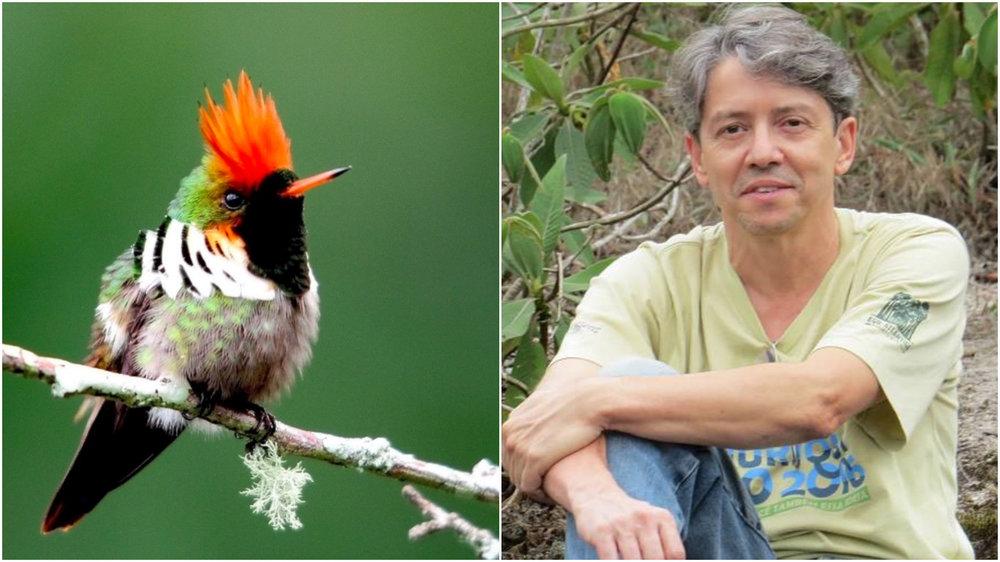 À esquerda, o beija-flor topetinho-vermelho, símbolo do Instituto da mata atlântica;à direita, o professor Sérgio (foto: inma e arquivo pessoal)