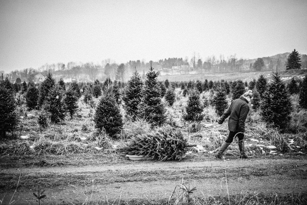 ChristmasTree-5.jpg