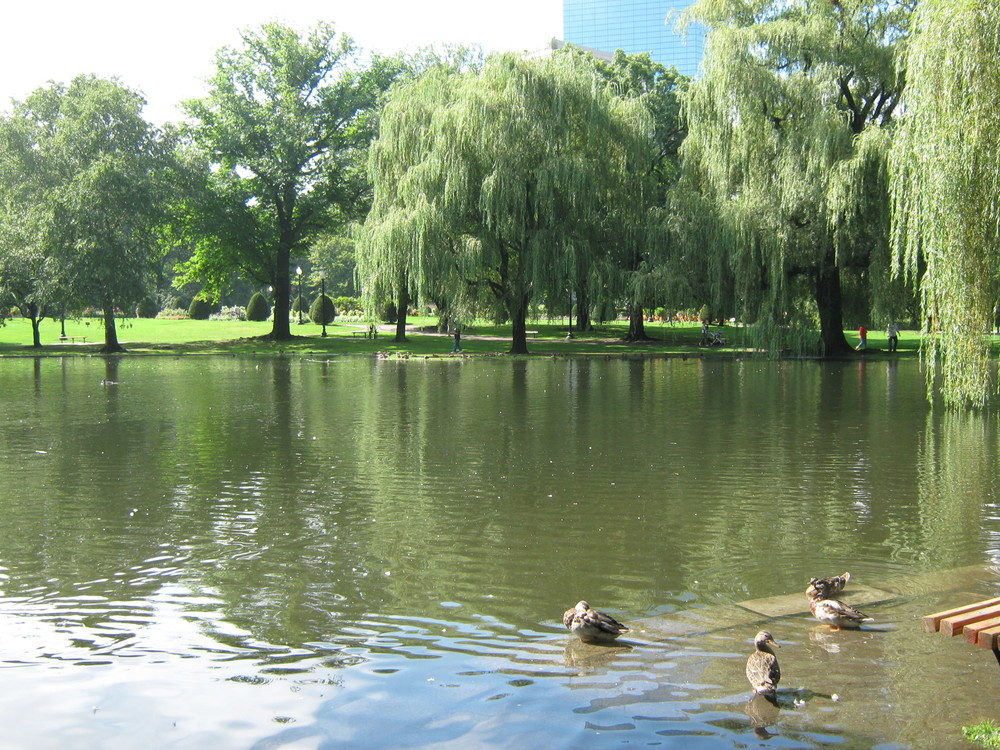 Four-acre man made lake in the Gardens