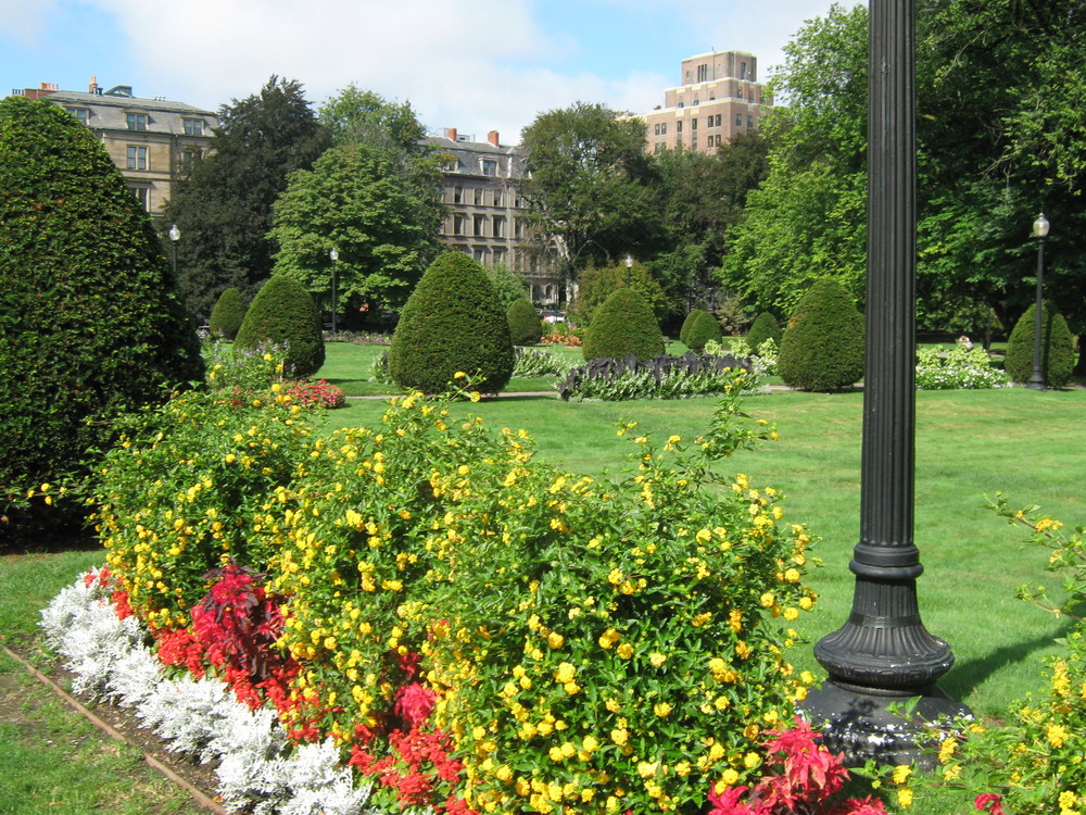 Public Gardens flora