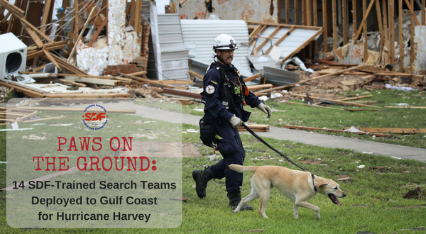 SDF-Harvey-action-featured-image-1.png