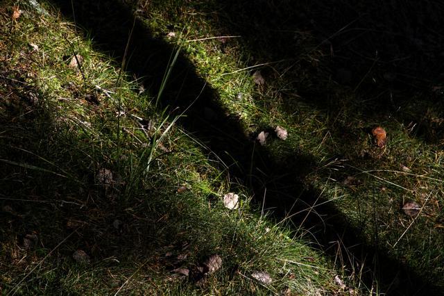 mtn_grass.jpg