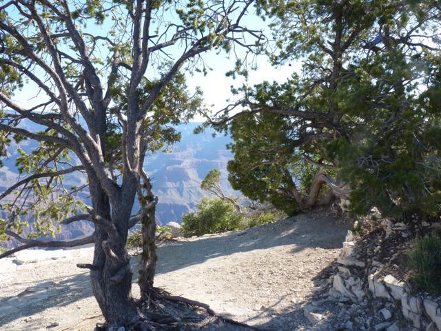 mtn_trees.jpg