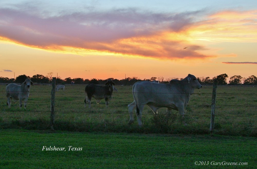 Pasture in Fulshear, Texas