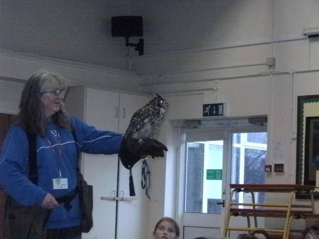 owl visit 3.JPG