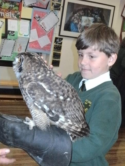 owl visit 4.JPG