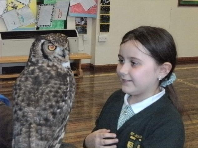 owl visit 5.JPG