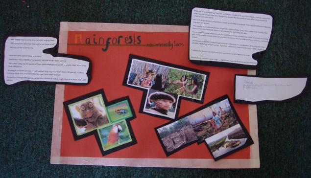 Sam's poster on the rainforest