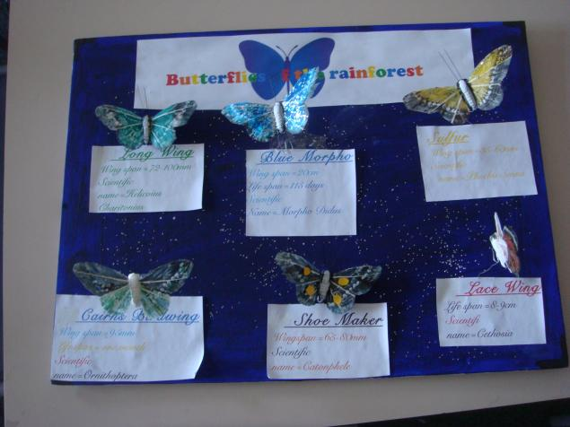 Evie's model of butterflies of the rainforest