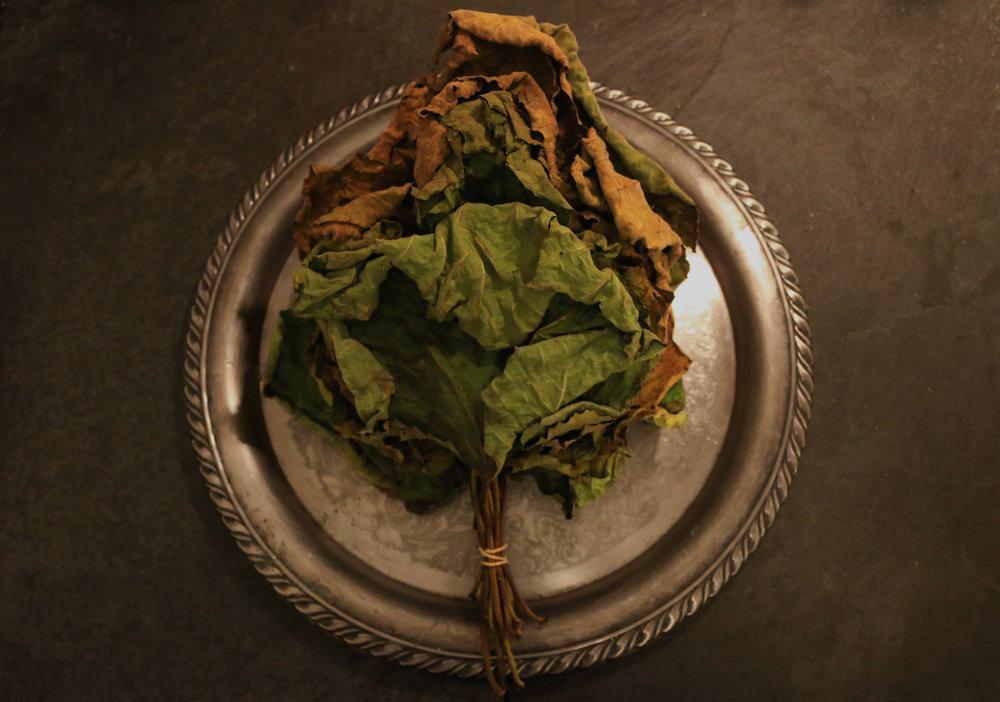 Figleaftea-nutrition-health-gourmandesante-3.jpg